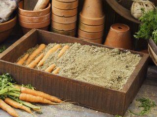 Хранение моркови в погребе зимой