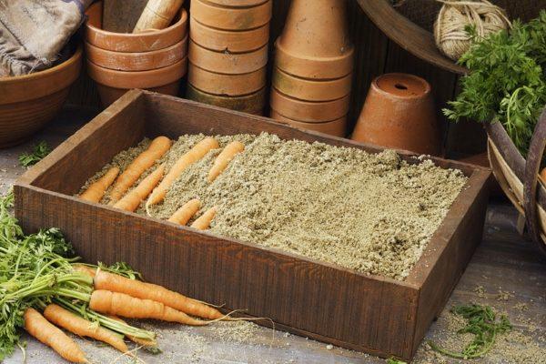 Хранение моркови на зиму в подвале видео