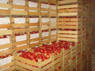 Хранение яблок зимой в погребе