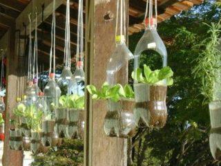 Выращивание клубники в пластиковых бутылках