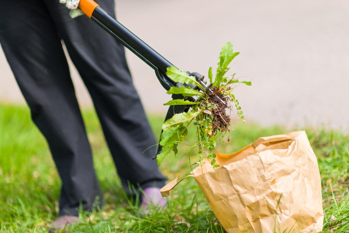 Препараты и средства от сорняков