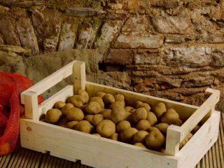 Чем обработать картофель для хранения