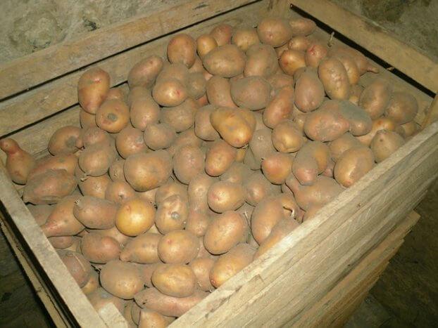 При какой температуре хранить картошку в подвале