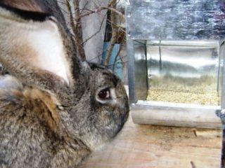 Бункерная кормушка для кроликов своими руками + чертежи