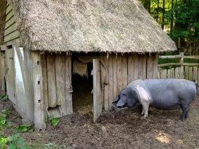 Постройка свинарника