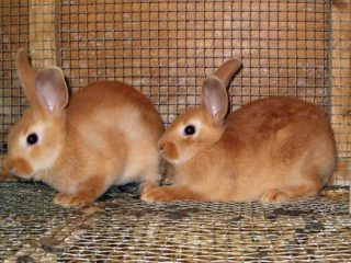 Клетка для карликового кролика своими руками