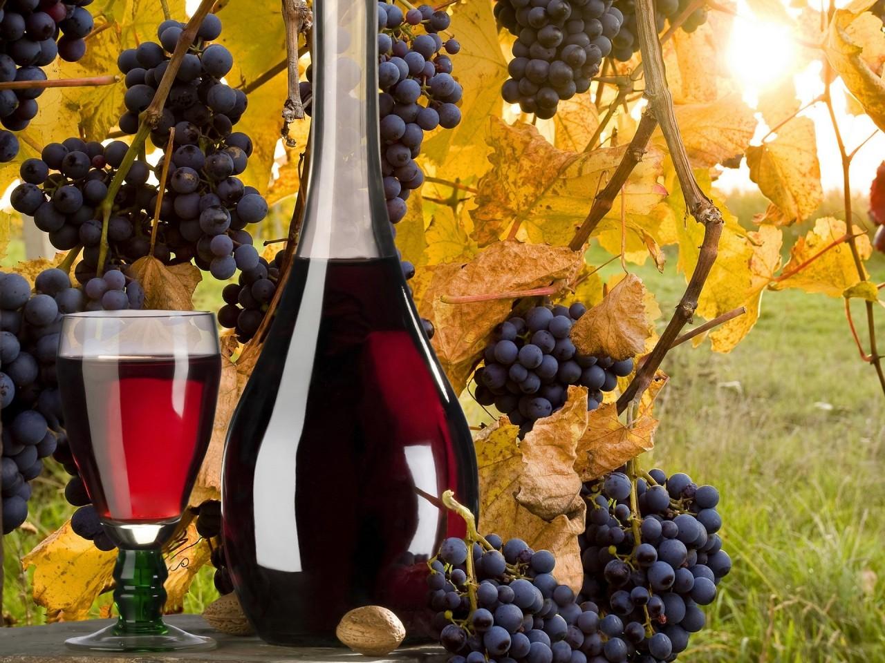 С днем винограда картинки, цветами ссср