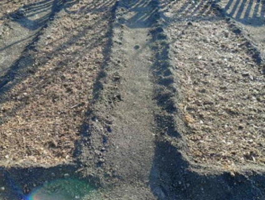 Чем удобрить землю осенью под чеснок
