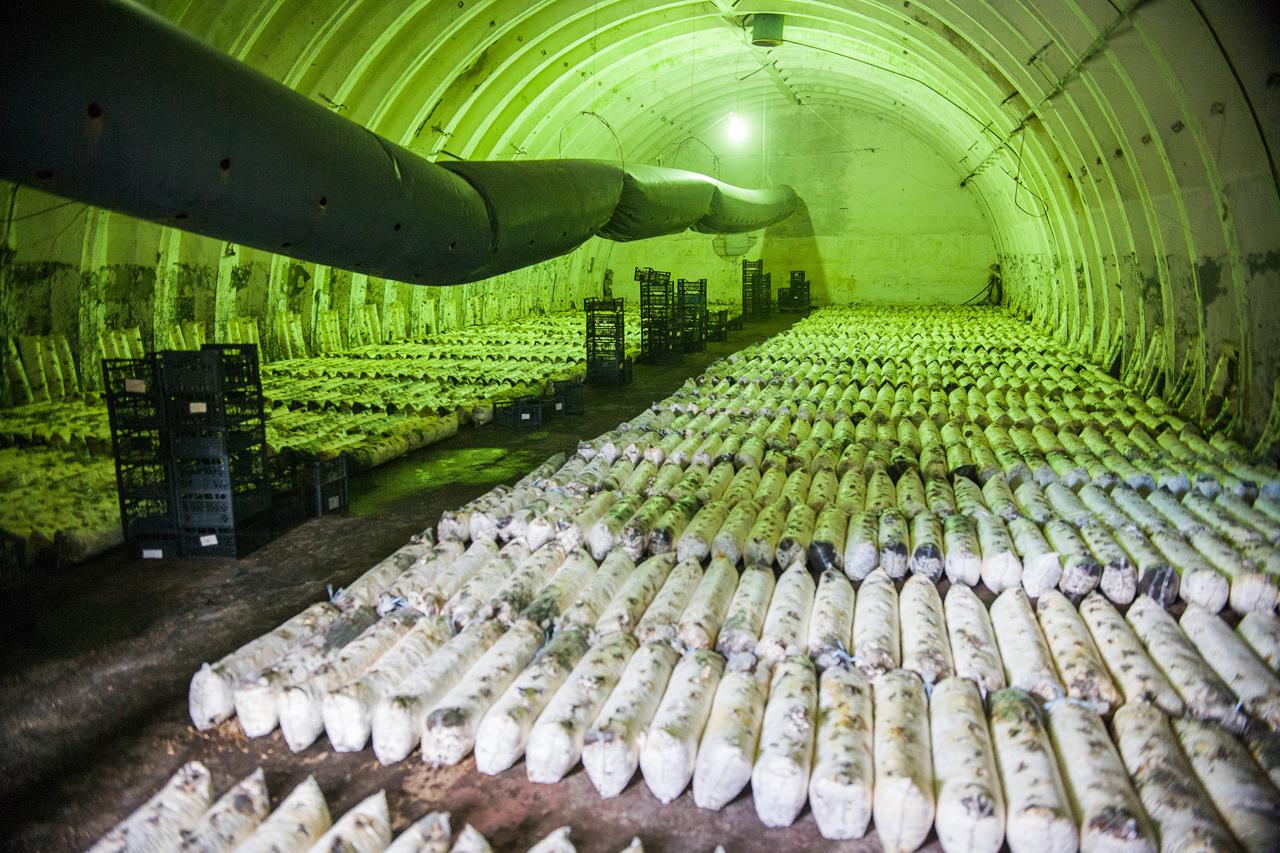 дает грибная ферма в подвале фото оформление особенно подойдет