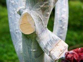 Побелка яблонь осенью: состав