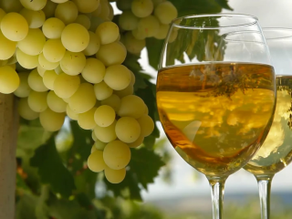 Домашнее белое вино из винограда: простые рецепты