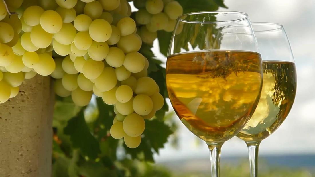 Из каких сортов винограда делают вино