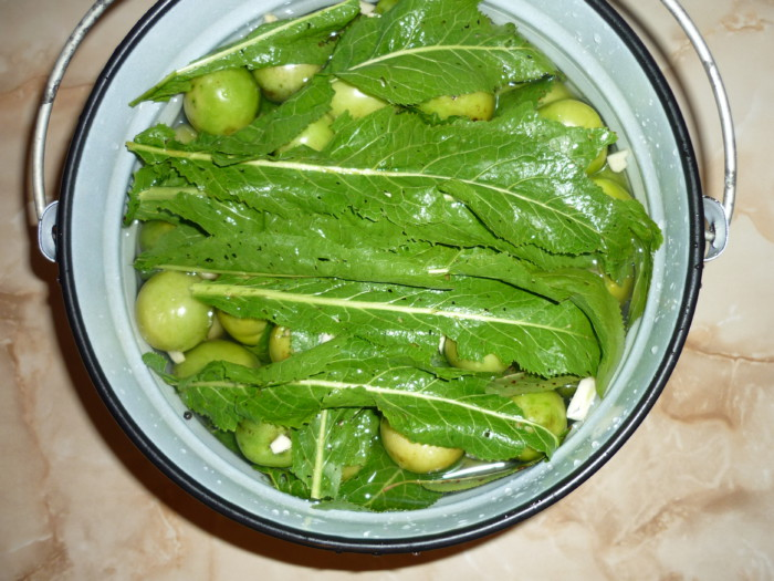 Засолка зеленых помидоров в пластиковом ведре