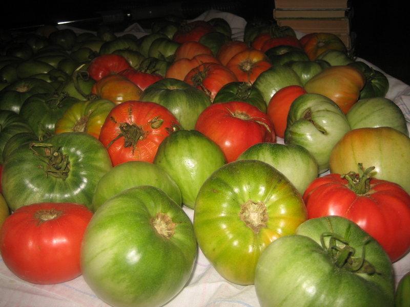Зеленые помидоры как сделать чтоб они покраснели