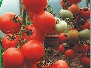 Томат Киржач: отзывы, фото, урожайность