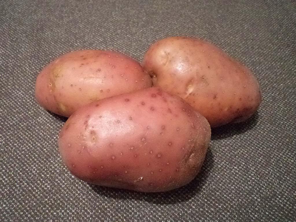 Картофель Манифест - OgorodGuru