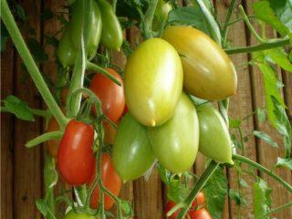 Томат Ниагара: отзывы, фото, урожайность