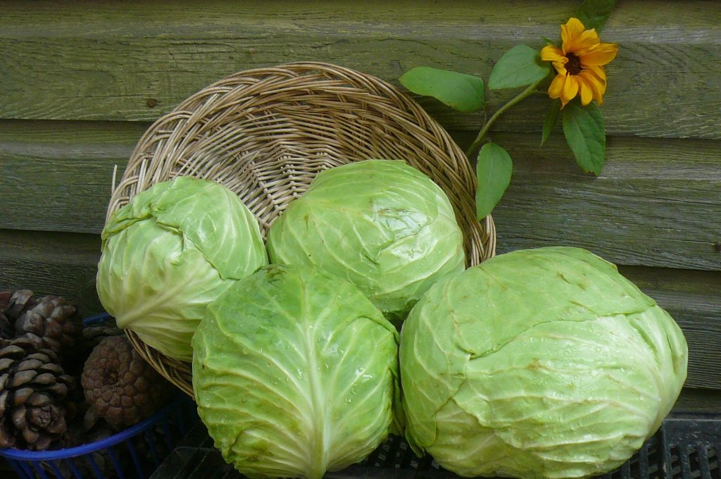 Сорта капусты: фото с названием. Описание особенностей выращивания