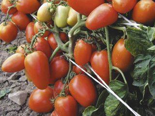 Томат Валентина: отзывы, фото, урожайность