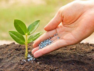 Удобрение Фертика: состав, применение