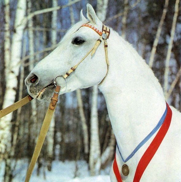 Орловская лошадь отличительные признаки породы