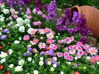 Цветы-однолетники для клумбы: фото с названиями