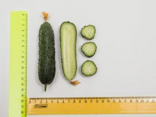 Огурец Гуннар F1: характеристика, технология выращивания