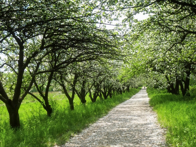 Какие кустарники садить весной. Посадка плодовых деревьев и кустарников весной. Уход за посадками