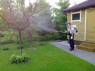 Обработка плодовых деревьев медным купоросом весной