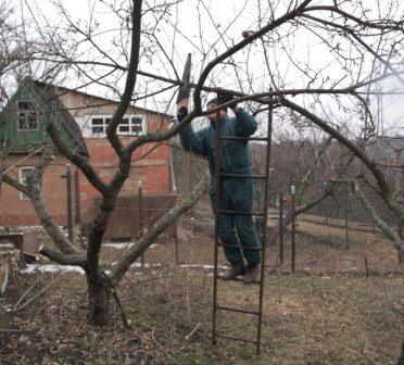 Как поэтапно омолодить старую яблоню в саду