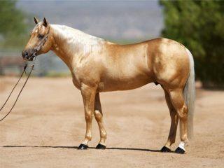 Породы лошадей с фотографиями и названиями