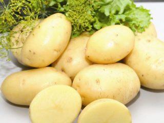 Картофель Леди Клер: характеристика сорта, отзывы