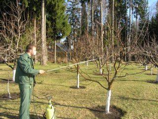 Чем опрыскивать плодовые деревья от болезней и вредителей