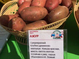 Картофель Ажур