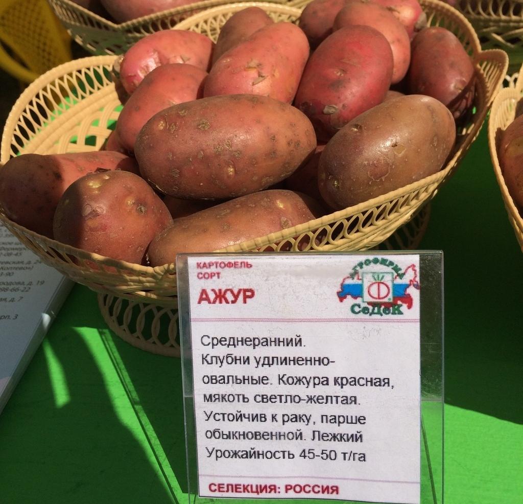 Картофель ажур описание