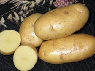 Картофель Чародей