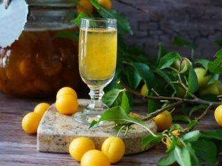 8 рецептов домашнего вина из алычи