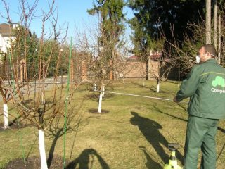 Чем обработать сливу весной