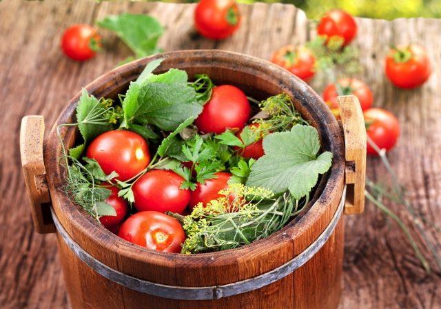 Засолка помидор холодным способом в ведре, в кастрюле, в банках, в бочке