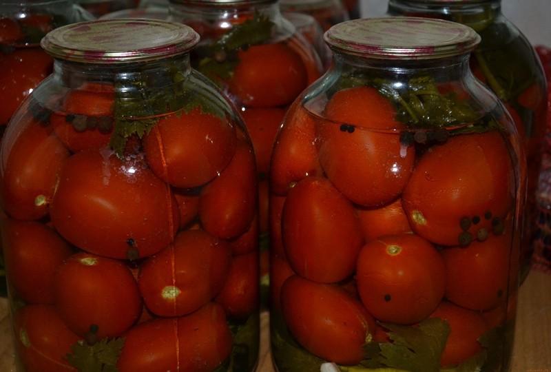 Соленые помидоры на зиму в банках