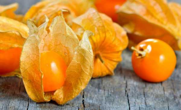 Как вырастить в саду вкусный и полезный физалис