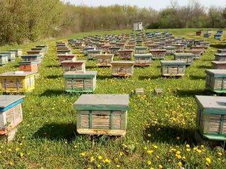 Промышленное пчеловодство