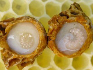 Что такое пчелиное молочко
