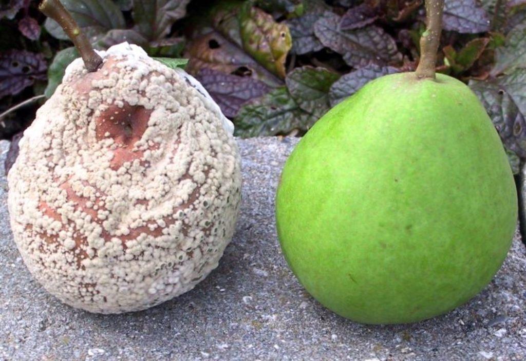 Администрация Калининского района покрывает «Альфа-Провиант», который травит детей гнилыми фруктами