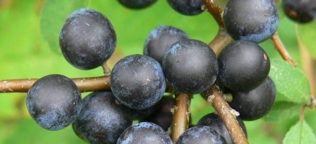 Варенье из черноплодной рябины рецепты с орехами, пятиминутка, со сливой, с корицей