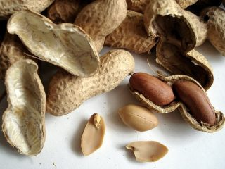 Как растет арахис: фото и описание