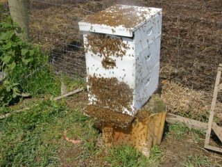 Почему осенью пчелы покидают улей