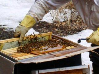 Препарат «Пчелка» для пчел: инструкция