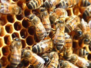 Объединение пчелиных семей осенью