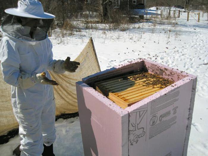 Подготовка пчел к зиме на улице и в лежаках